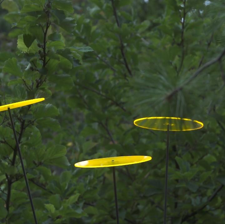 cazador del sol sonnenf nger tres gelb 3er set 1 75 m hoch. Black Bedroom Furniture Sets. Home Design Ideas